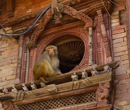 Never trust a monkey!